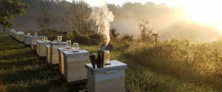 Apex Bee Company, LLC